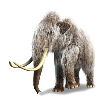 The Wooly Mammoth in the Room:  The FairTax Solution